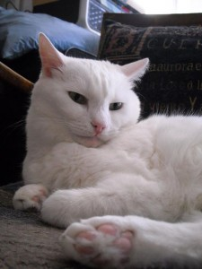 Catsitter-Club Katze
