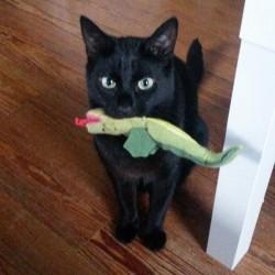 Spielen mit Katze