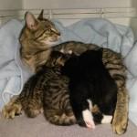 Mutterkatze mit Welpen