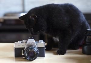 Kater Sazou mit Kamera