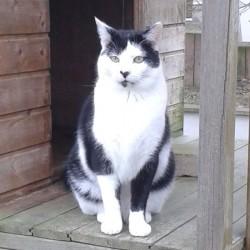 Valentins-Katzen zum Verlieben: Lucky