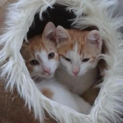 Ein Geschenk mit Herz – Die Tierpatenschaft