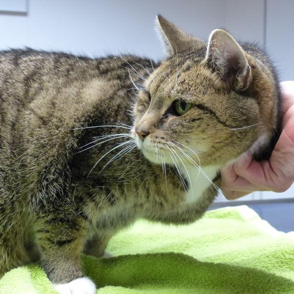 Minka beim Tierarzt
