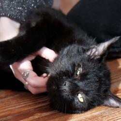 Herzlich willkommen! – Catsitter-Club wieder besetzt