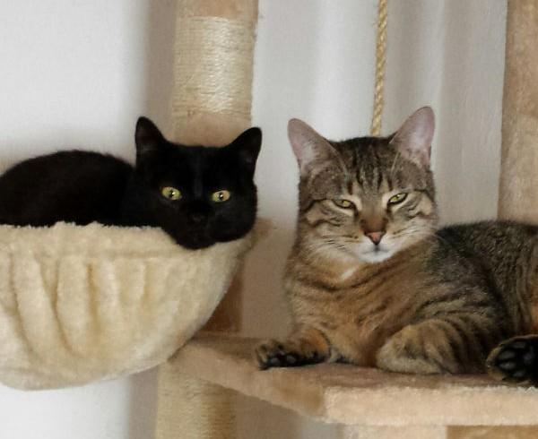 Grundausstattung für Katzen