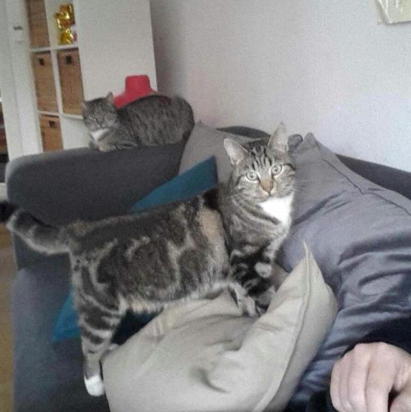 katze436_kitty_kassy3