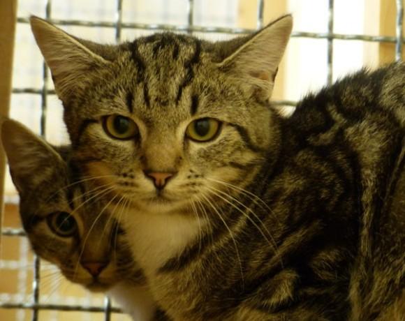 Kassy und Kitty