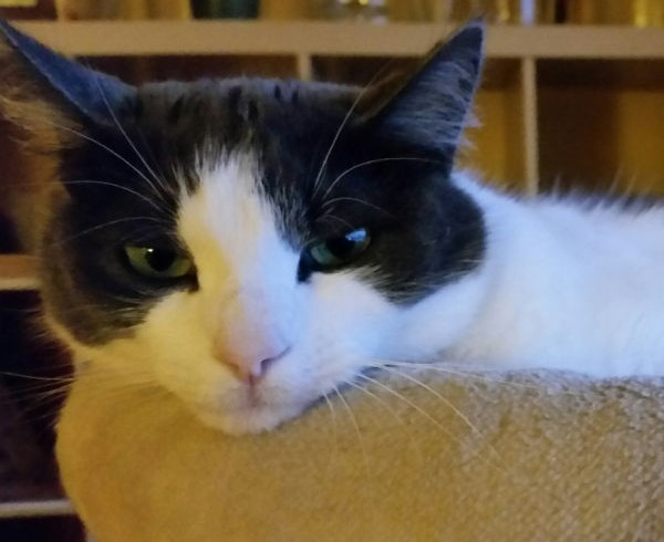 Die böse Technik: Catsitter-Club eingeschränkt