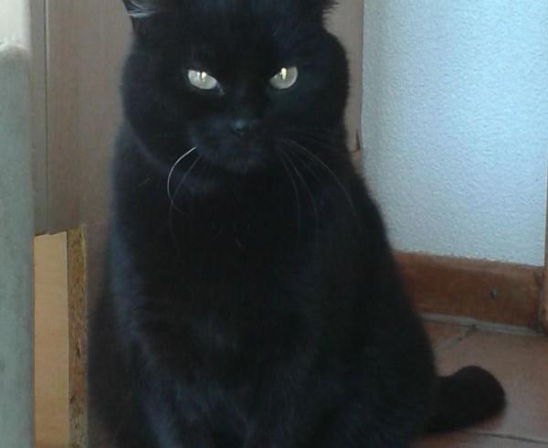 Valentins-Katzen zum Verlieben: Mowglie