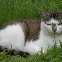 Miau, miau – Türchen 24 geht auf!