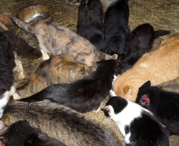 Schattenseiten eines Katzenparadieses