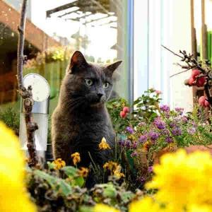 Katze559_Köbbes_Balou3