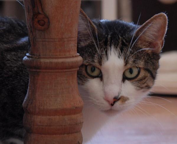 Catsitter-Club macht Pause!