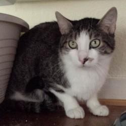 Valentins-Katzen zum Verlieben: Ozzy, genannt Männlein