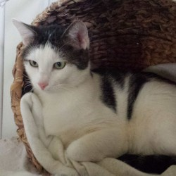 Valentins-Katzen zum Verlieben: Mütze
