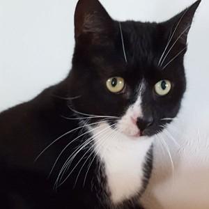 Katze Lina