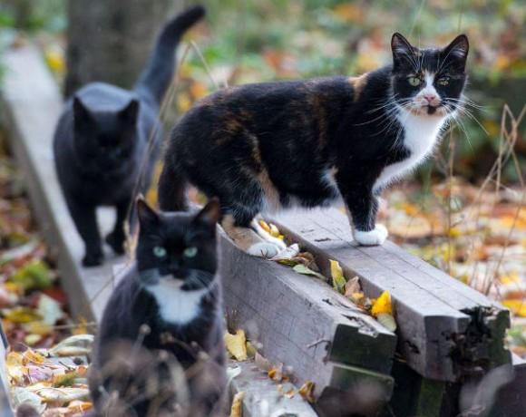 Gartenkatzen Troisdorf