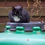 Gartenkatze Penny
