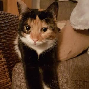 Katze658_Patty-1
