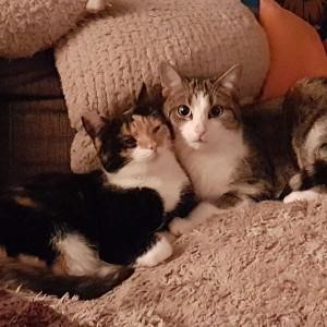 Katze658_Patty Gypsi