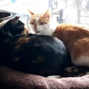 Katze658_Sally Tobbi