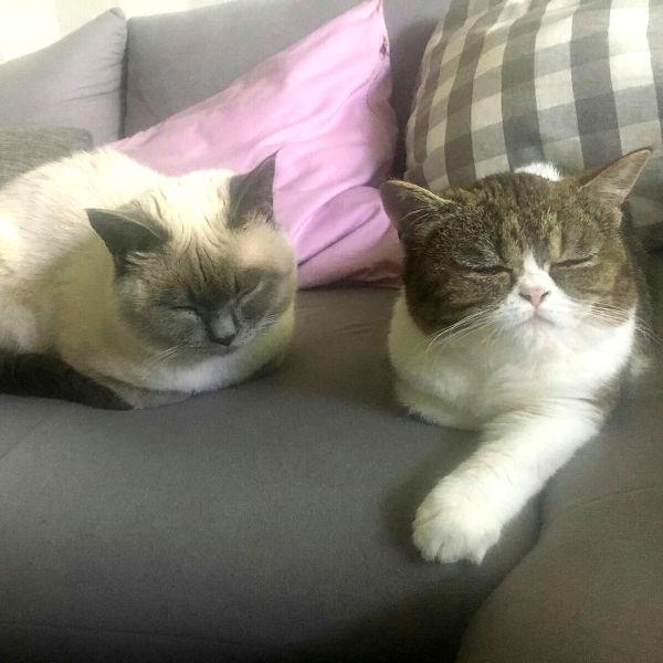 Tess und Gibson