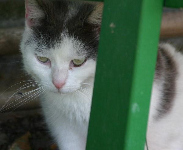 22. Dezember – Der Bornheimer Straßenkatzen Wunschzettel