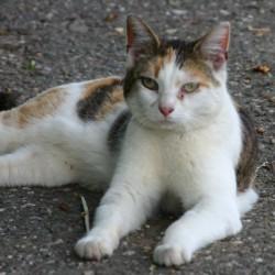 21. Dezember – Die Bornheimer Straßenkatzen