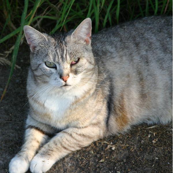 Bornheimer Straßenkatzen