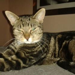Katze Filou