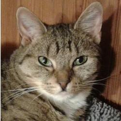 Valentins-Katzen zum Verlieben: Luna