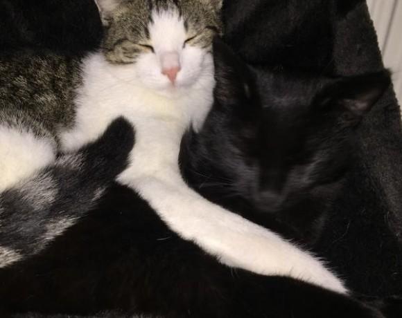 Ollo (jetzt Sam) und Hugo