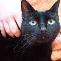 Valentins-Katzen zum Verlieben: Lulu