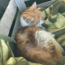 Fundkater Vito: Wieviel Leid kann eine kleine Katzenseele ertragen?