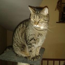 Valentins-Katzen zum Verlieben: Jacky