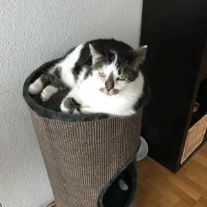 Katze707_Charly_Home2