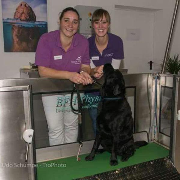 Tierzentrum Rhein-Sieg: ″Physiotherapie für Katzen″