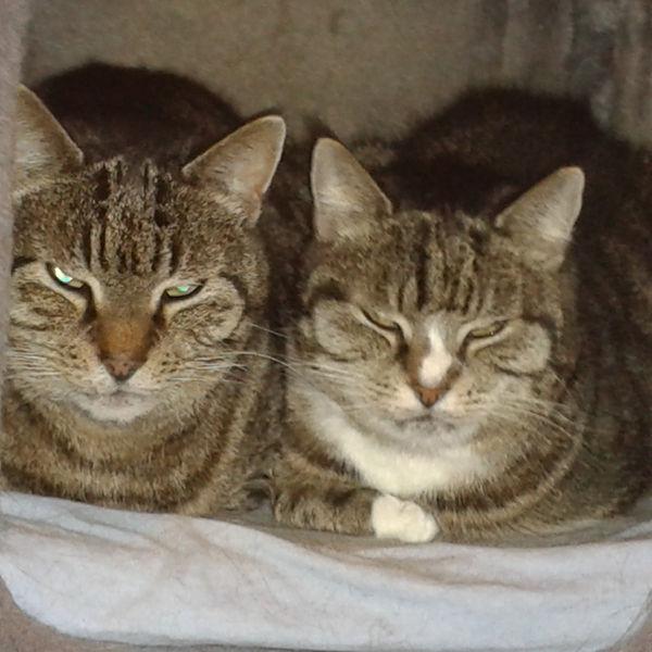 Lisa und Tiger