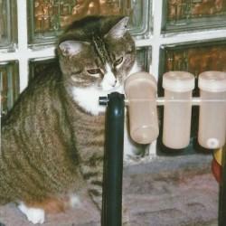 Grüße von Katzenmädel Feena