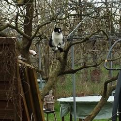 40 Jahre: Geschichte 1 – Die  Katze im Baum