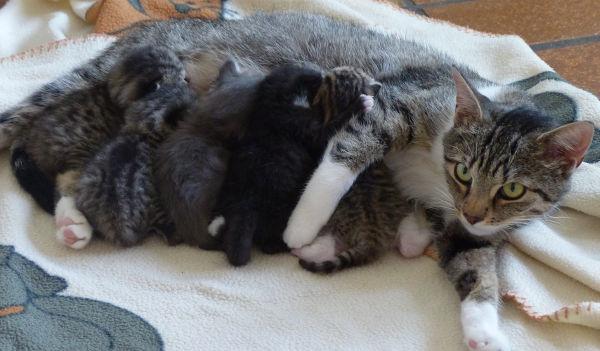 Adoptiv-Familie