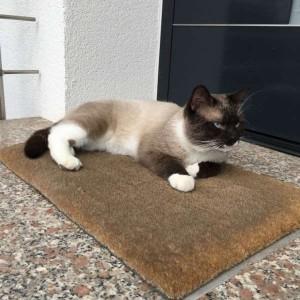 Katze785_Aslan2