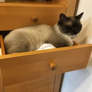 Katze785_Aslan4