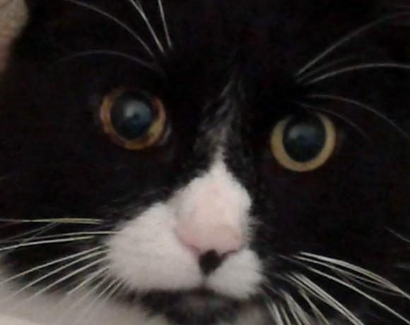Benny (Spitzname Schluppi)