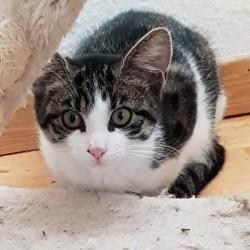 Für 1.000 € wieder laufen können: Katzenkind Coco bittet um Ihre Hilfe