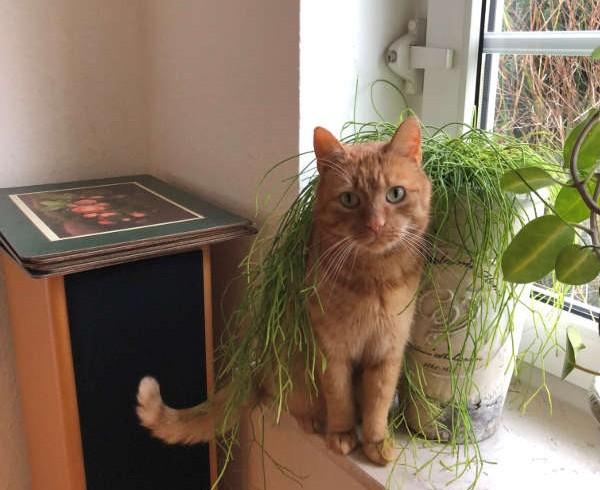 Grüße aus dem neuen Zuhause von Katze Shila