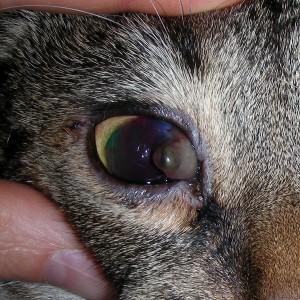 Jackys arg verletztes Auge