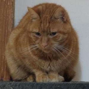 Katze Shila