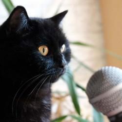 Karaoke für die Katz': KJ Sascha sammelt für die Gartenkatzen