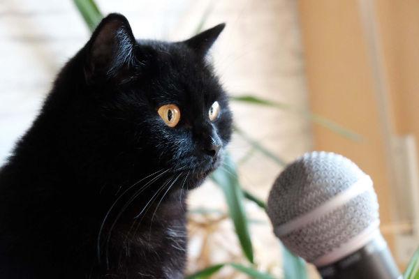 Karaoke für die Katz', Sascha Engst, Bonn